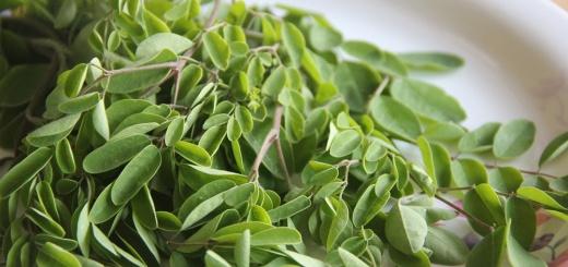 Moringa - Das gesunde Multitalent