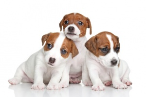 Wie erkenne ich gutes und hochwertiges Hundefutter?